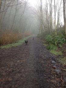 comfort trail